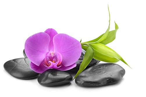 Galets et orchidée